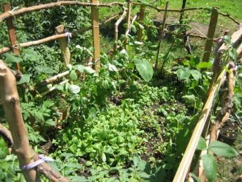 Ingersoll Garden, photo courtesy of Myrtle Eats Fresh