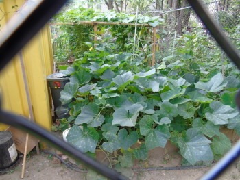 A community garden in East Harlem