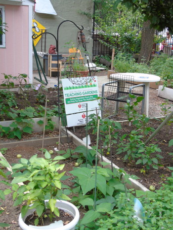 An urban garden on 118th street and Lexington Avenue in East Harlem