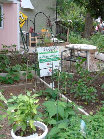 An urban garden on 118th street and Lexington Avenue in East Harlem